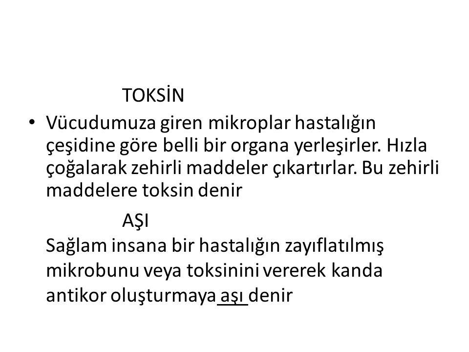 TOKSİN
