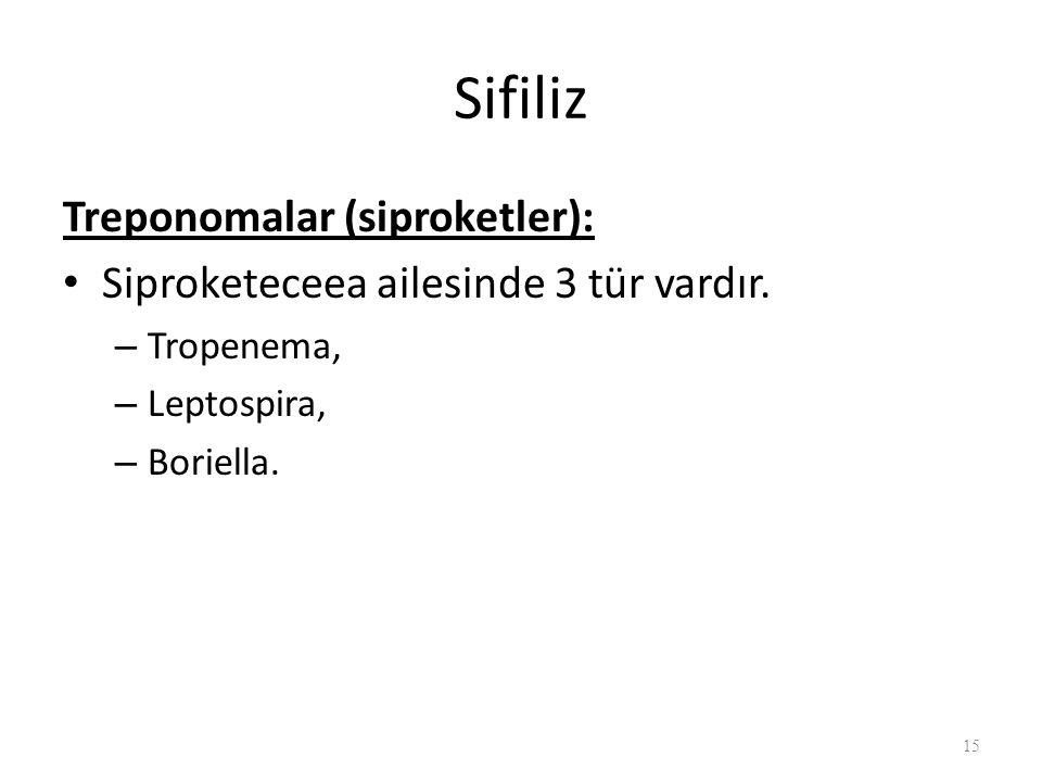 Sifiliz Treponomalar (siproketler):