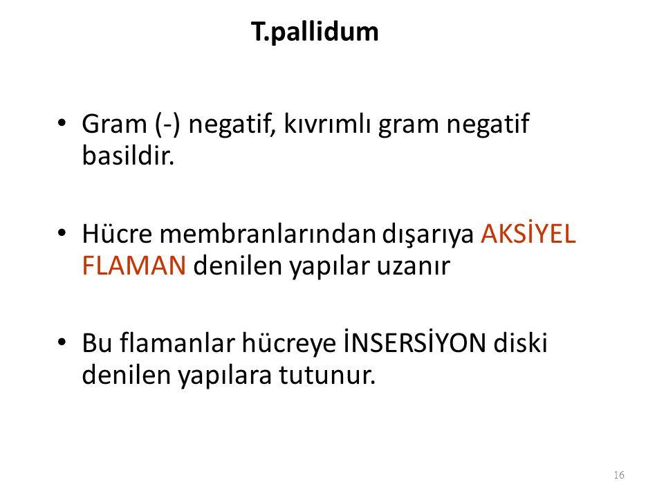 T.pallidum Gram (-) negatif, kıvrımlı gram negatif basildir. Hücre membranlarından dışarıya AKSİYEL FLAMAN denilen yapılar uzanır.
