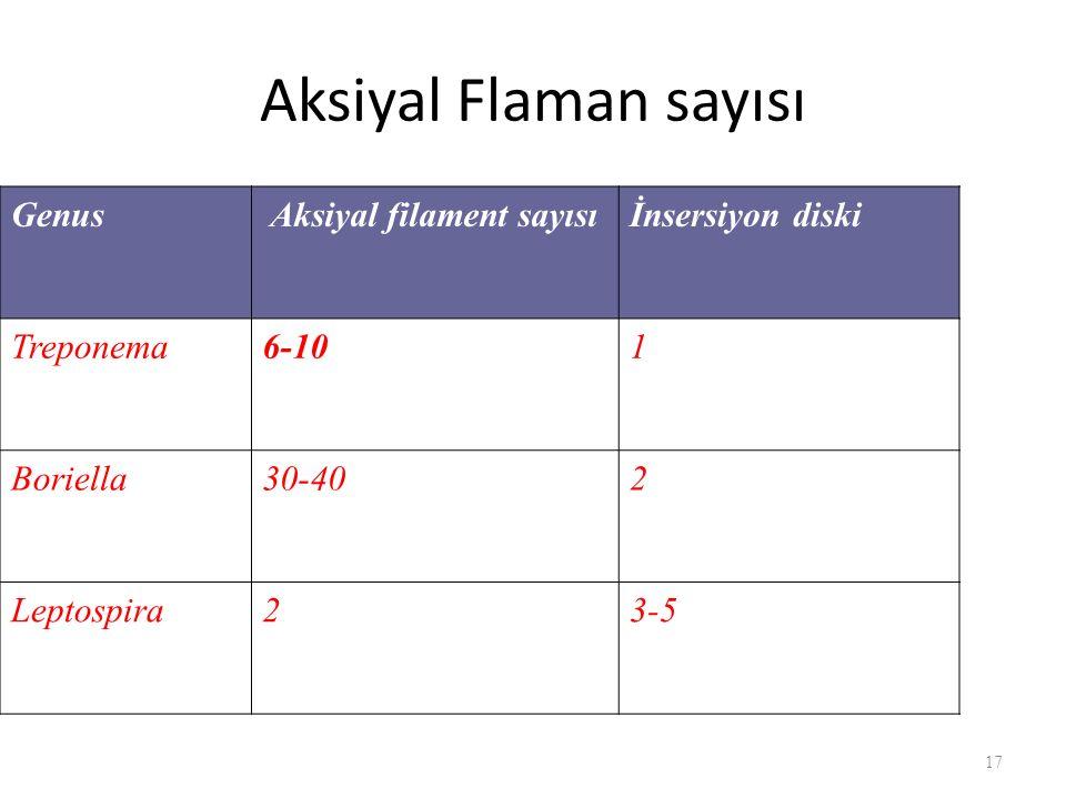 Aksiyal Flaman sayısı Genus Aksiyal filament sayısı İnsersiyon diski