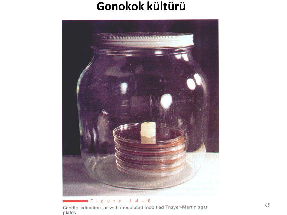 Gonokok kültürü