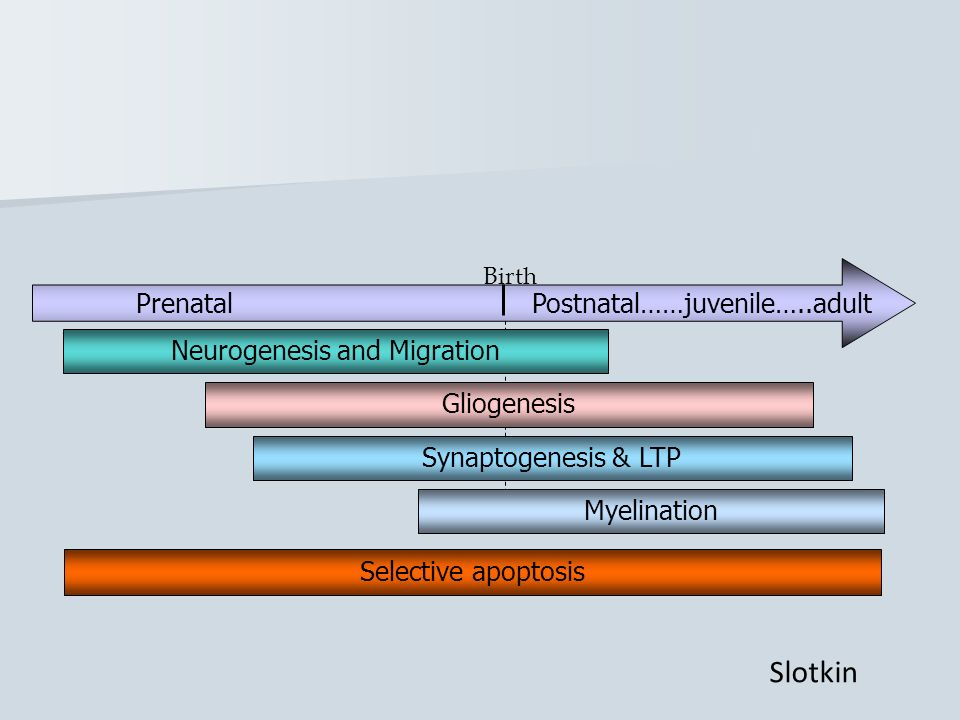 Slotkin Prenatal Postnatal……juvenile…..adult