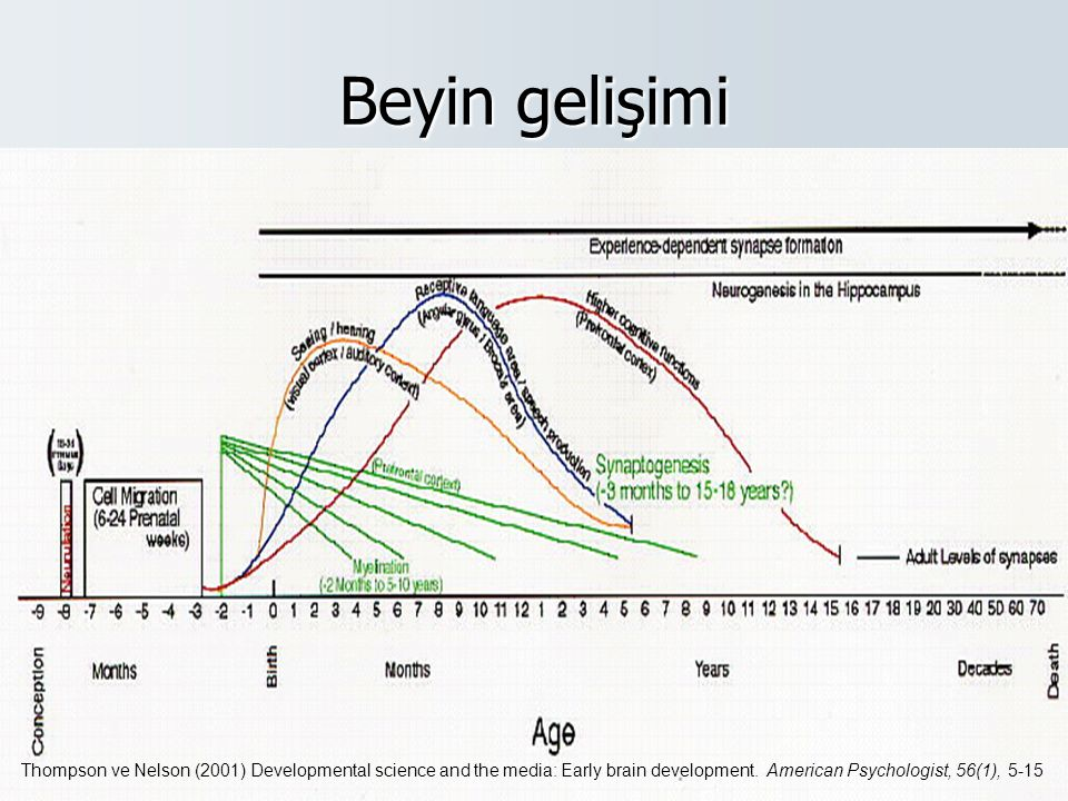 Beyin gelişimi Thompson ve Nelson (2001) Developmental science and the media: Early brain development.
