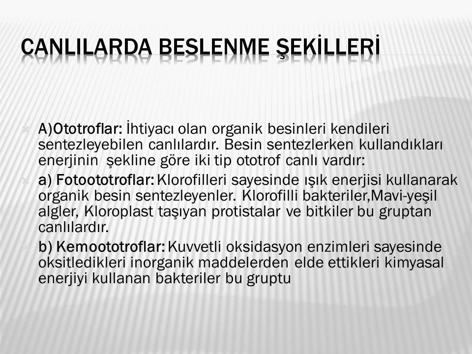 CANLILARDA BESLENME ŞEKİLLERİ