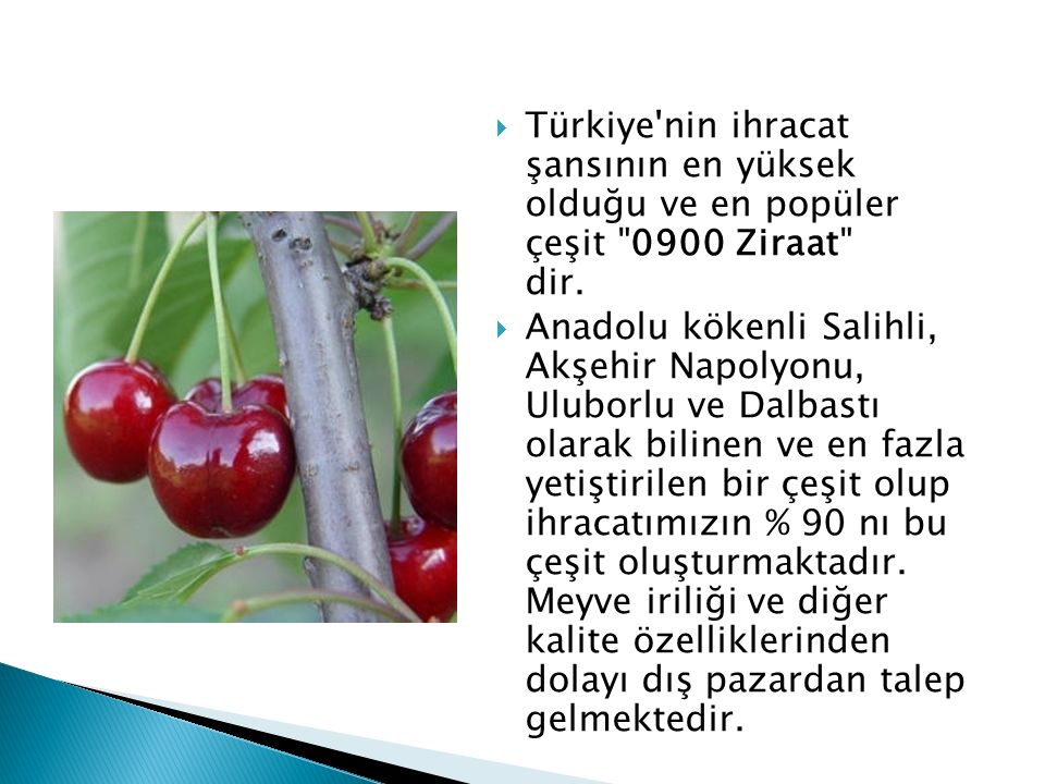Türkiye nin ihracat şansının en yüksek olduğu ve en popüler çeşit 0900 Ziraat dir.