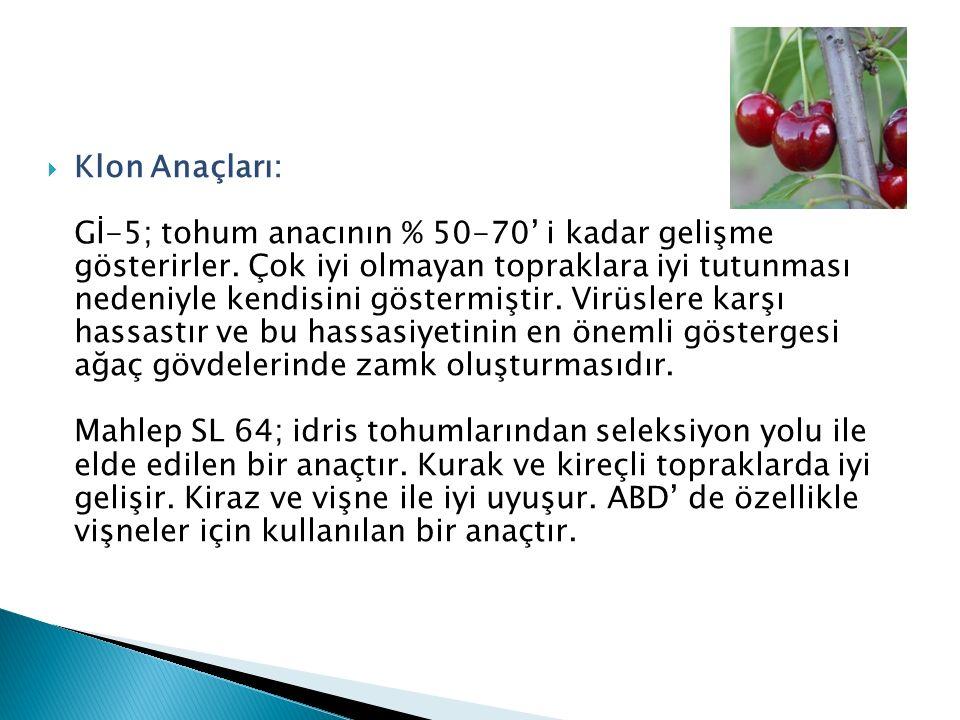 Klon Anaçları: Gİ-5; tohum anacının % 50-70' i kadar gelişme gösterirler.