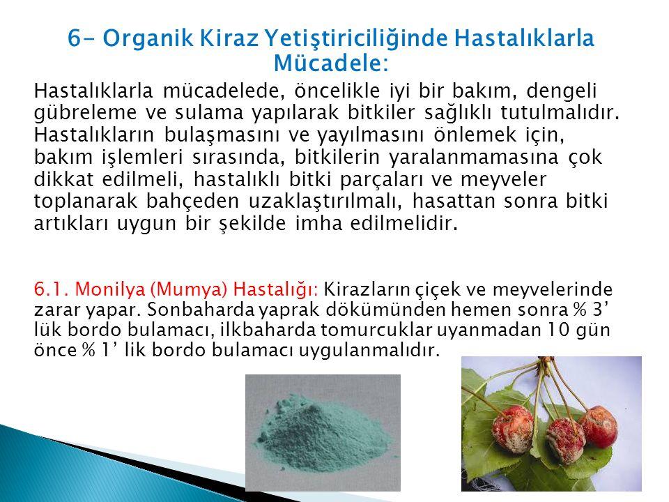 6- Organik Kiraz Yetiştiriciliğinde Hastalıklarla Mücadele: