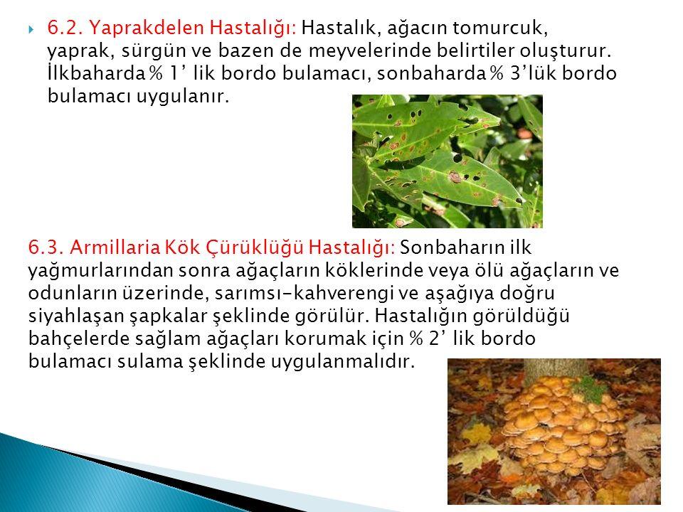 6.2. Yaprakdelen Hastalığı: Hastalık, ağacın tomurcuk, yaprak, sürgün ve bazen de meyvelerinde belirtiler oluşturur. İlkbaharda % 1' lik bordo bulamacı, sonbaharda % 3'lük bordo bulamacı uygulanır.