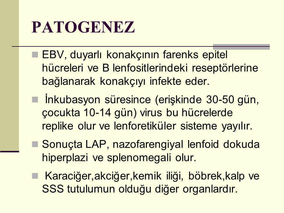 PATOGENEZ EBV, duyarlı konakçının farenks epitel hücreleri ve B lenfositlerindeki reseptörlerine bağlanarak konakçıyı infekte eder.