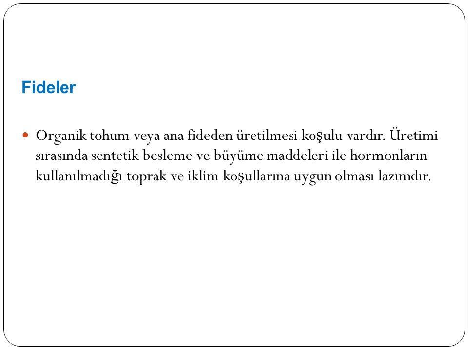 Fideler