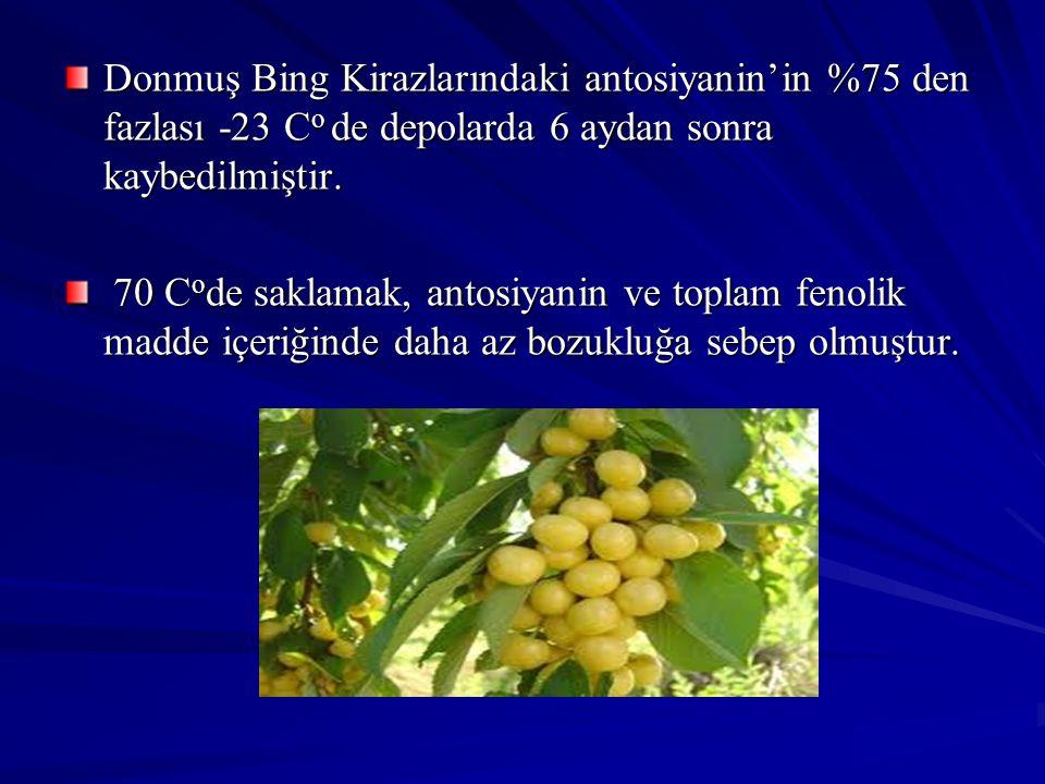 Donmuş Bing Kirazlarındaki antosiyanin'in %75 den fazlası -23 Co de depolarda 6 aydan sonra kaybedilmiştir.