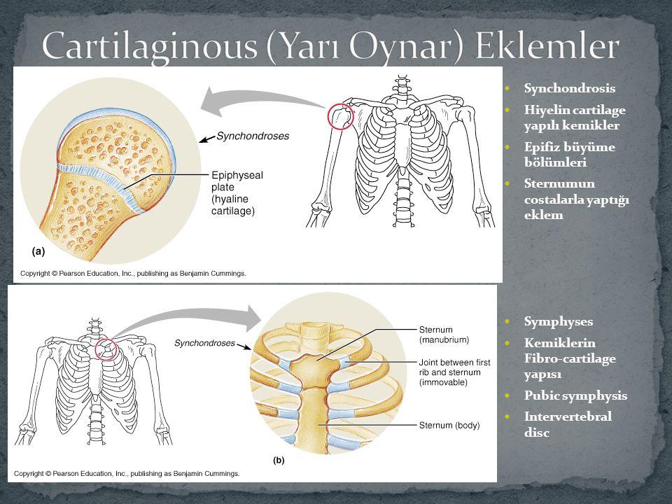 Cartilaginous (Yarı Oynar) Eklemler
