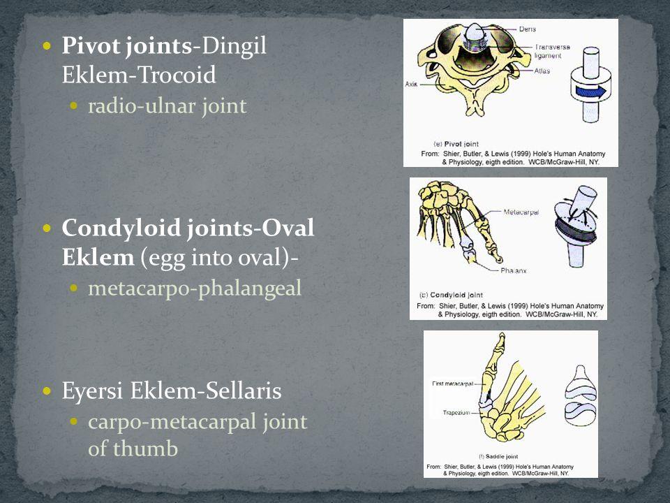 Pivot joints-Dingil Eklem-Trocoid