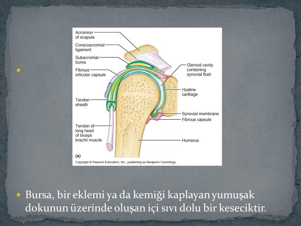 Bursa, bir eklemi ya da kemiği kaplayan yumuşak dokunun üzerinde oluşan içi sıvı dolu bir keseciktir.