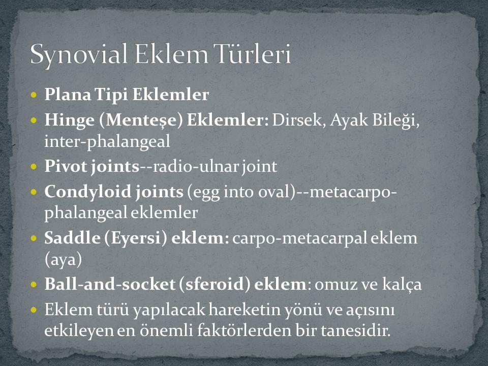 Synovial Eklem Türleri