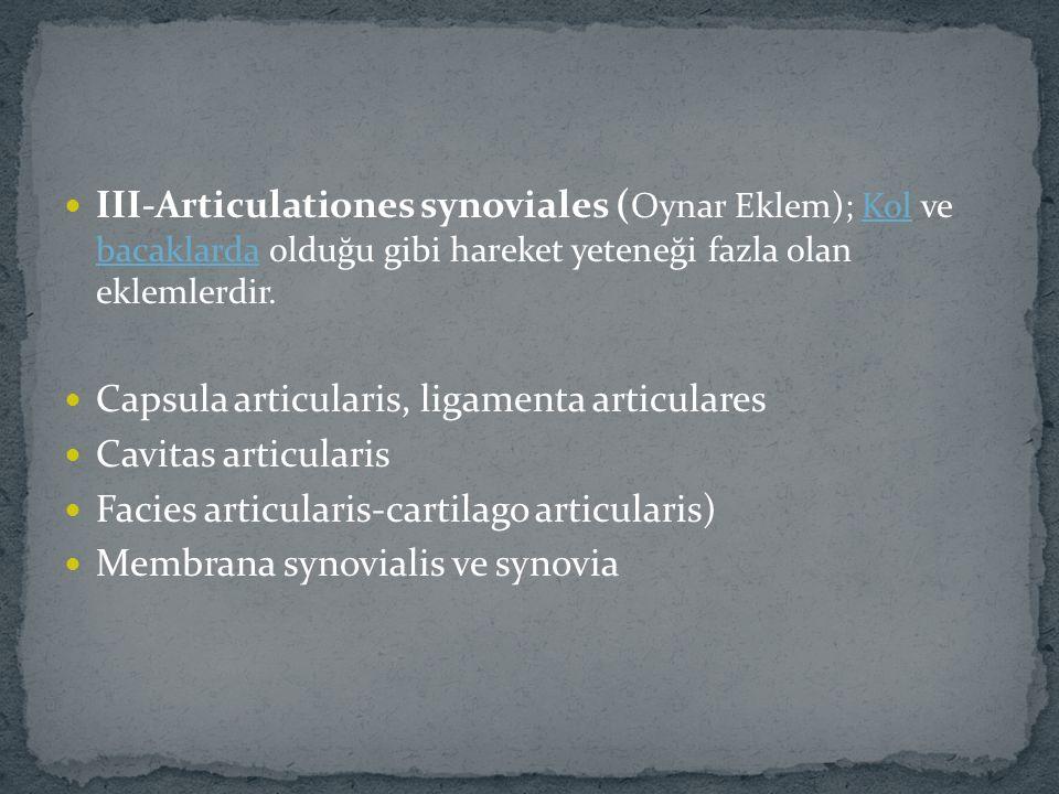 III-Articulationes synoviales (Oynar Eklem); Kol ve bacaklarda olduğu gibi hareket yeteneği fazla olan eklemlerdir.
