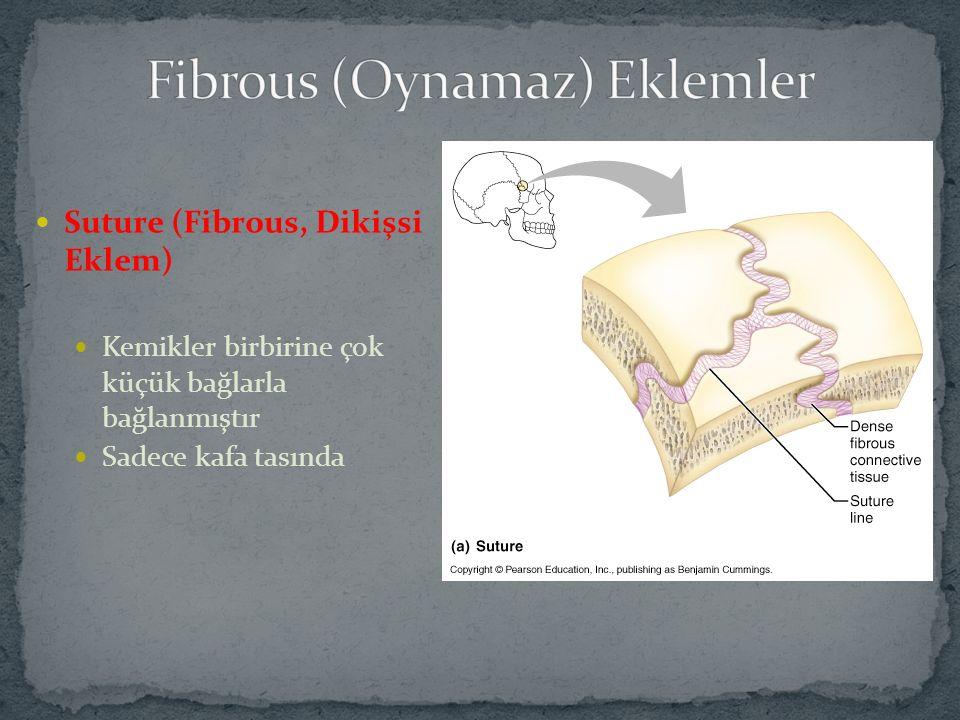 Fibrous (Oynamaz) Eklemler