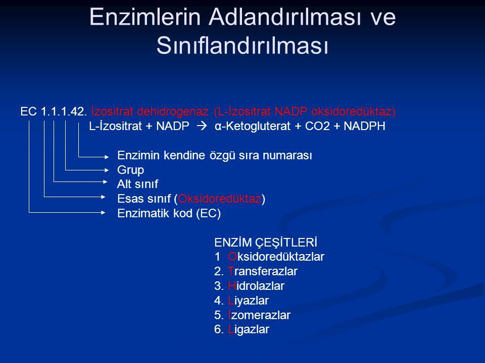 Enzimlerin Adlandırılması ve Sınıflandırılması
