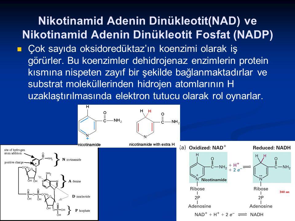 Nikotinamid Adenin Dinükleotit(NAD) ve Nikotinamid Adenin Dinükleotit Fosfat (NADP)