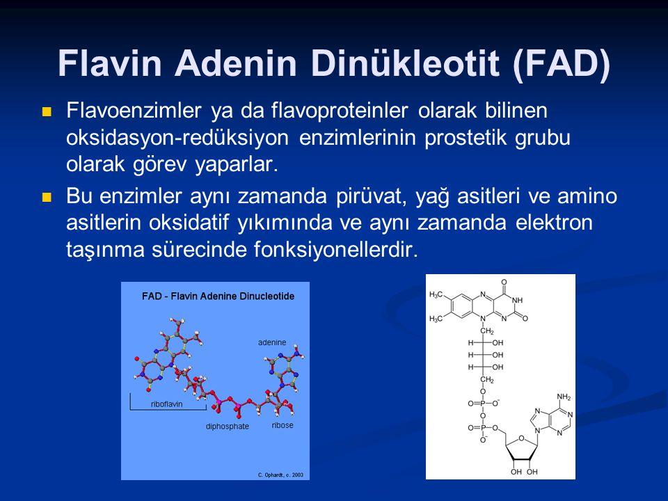 Flavin Adenin Dinükleotit (FAD)