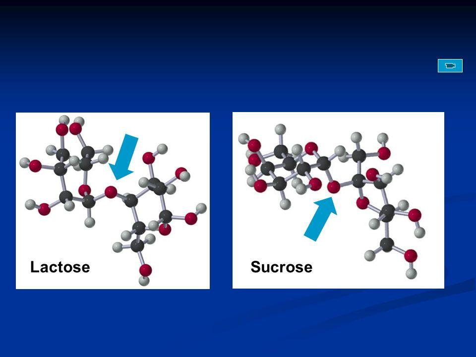 Lactose Sucrose