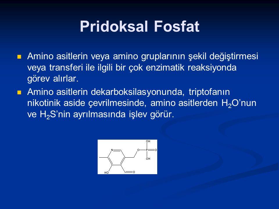 Pridoksal Fosfat Amino asitlerin veya amino gruplarının şekil değiştirmesi veya transferi ile ilgili bir çok enzimatik reaksiyonda görev alırlar.