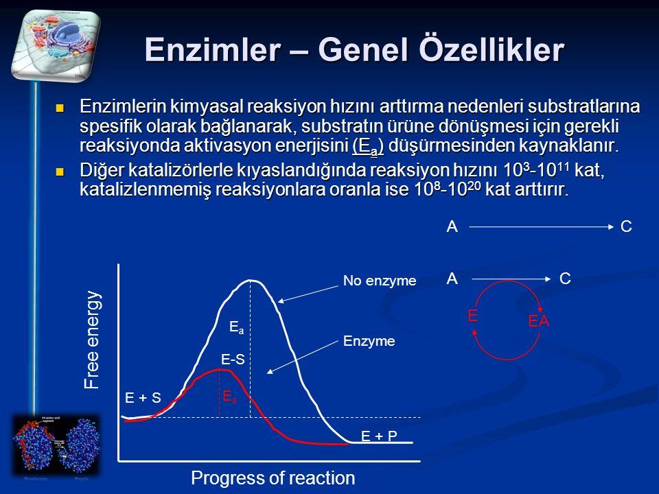Enzimler – Genel Özellikler