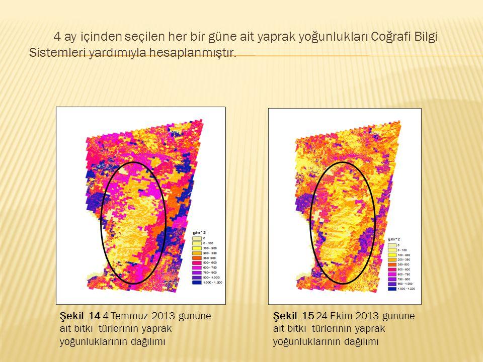 4 ay içinden seçilen her bir güne ait yaprak yoğunlukları Coğrafi Bilgi Sistemleri yardımıyla hesaplanmıştır.