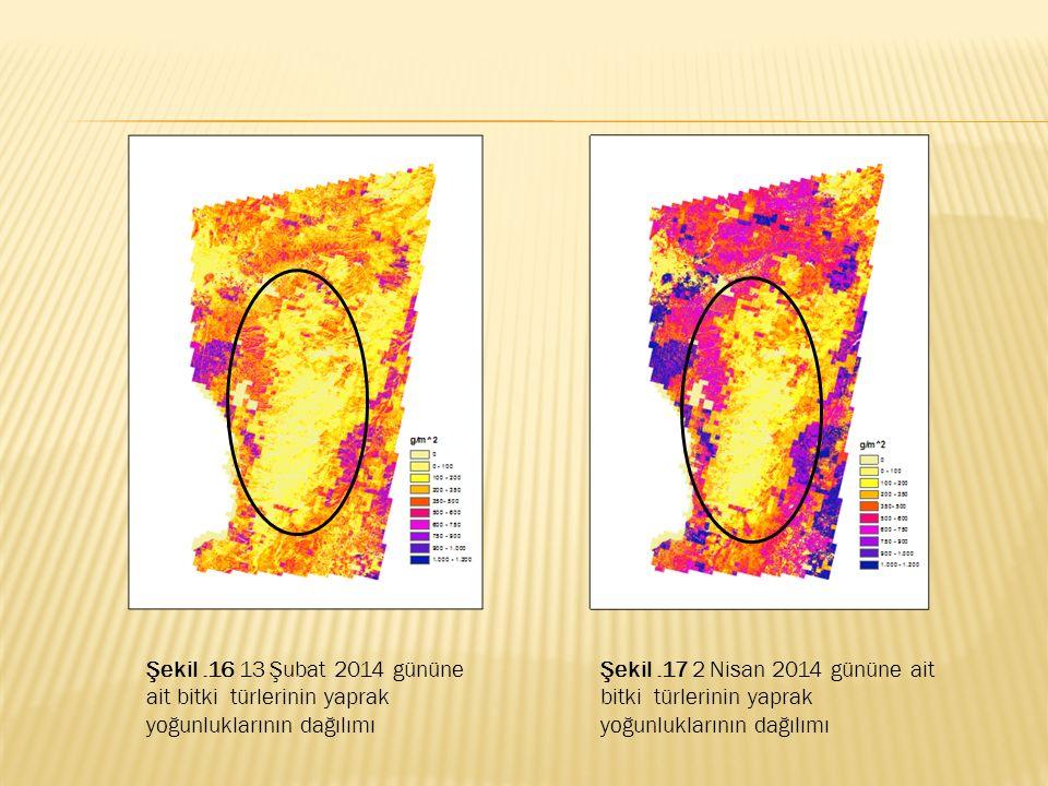 Şekil .16 13 Şubat 2014 gününe ait bitki türlerinin yaprak yoğunluklarının dağılımı