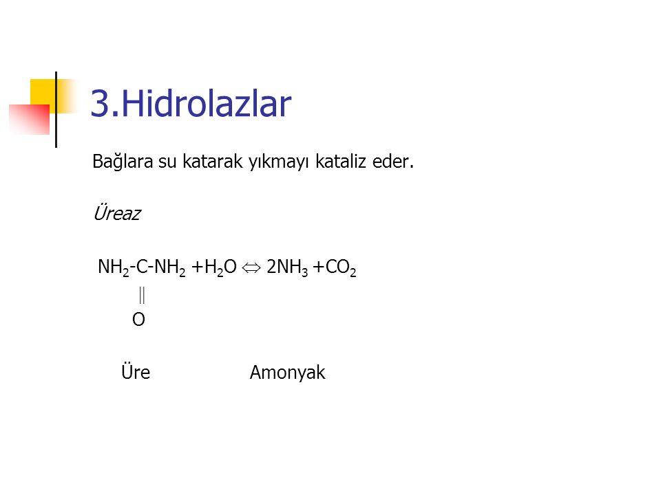 3.Hidrolazlar Bağlara su katarak yıkmayı kataliz eder.