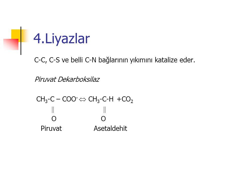 4.Liyazlar C-C, C-S ve belli C-N bağlarının yıkımını katalize eder.