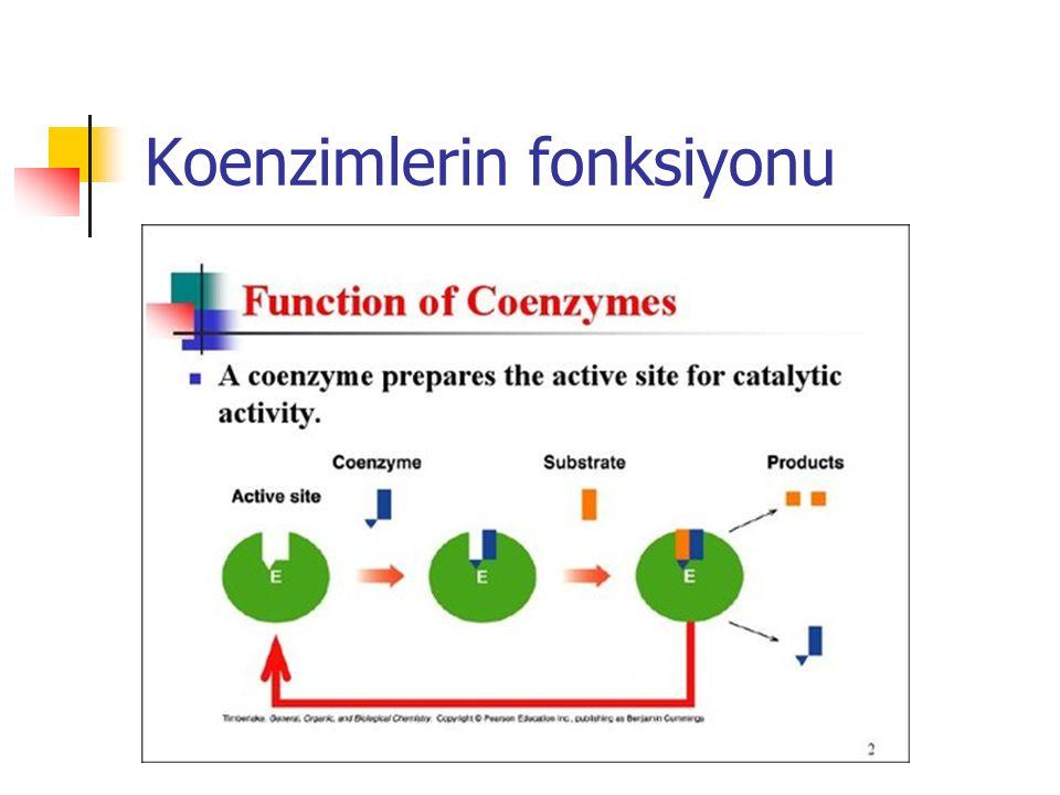 Koenzimlerin fonksiyonu