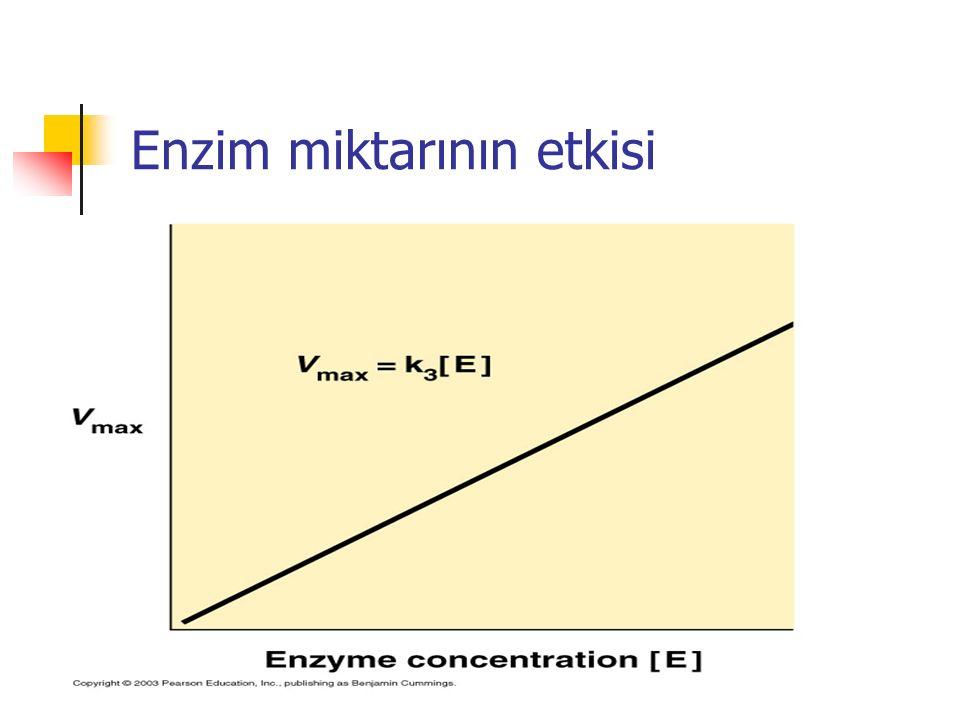 Enzim miktarının etkisi