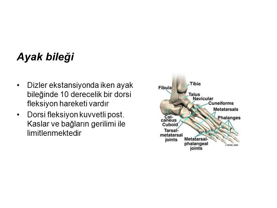 Ayak bileği Dizler ekstansiyonda iken ayak bileğinde 10 derecelik bir dorsi fleksiyon hareketi vardır.