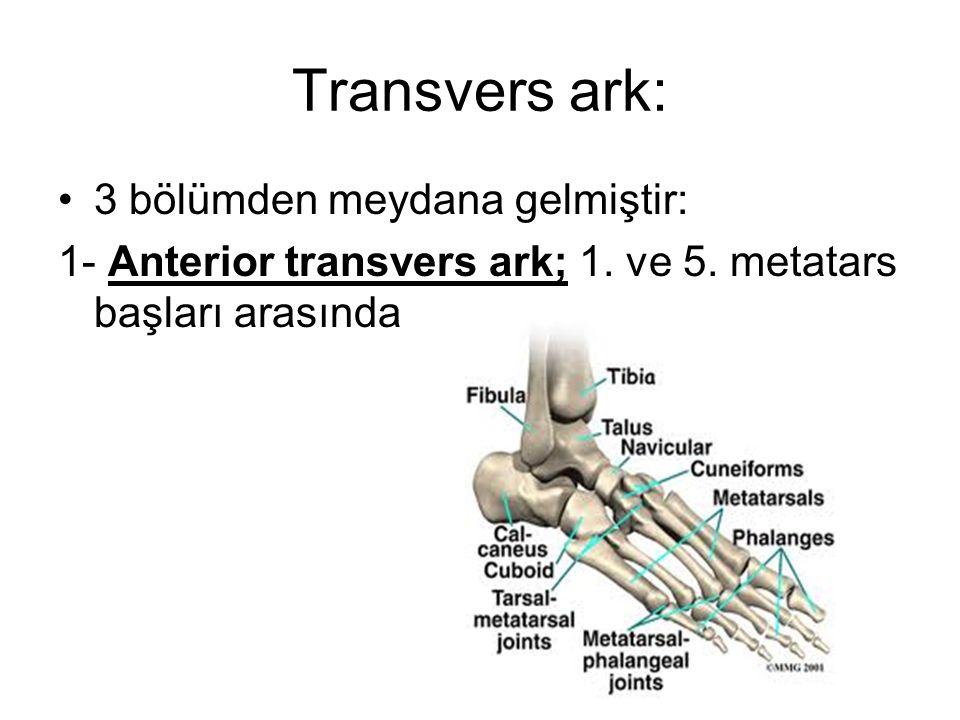 Transvers ark: 3 bölümden meydana gelmiştir:
