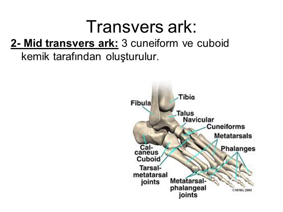 Transvers ark: 2- Mid transvers ark: 3 cuneiform ve cuboid kemik tarafından oluşturulur.