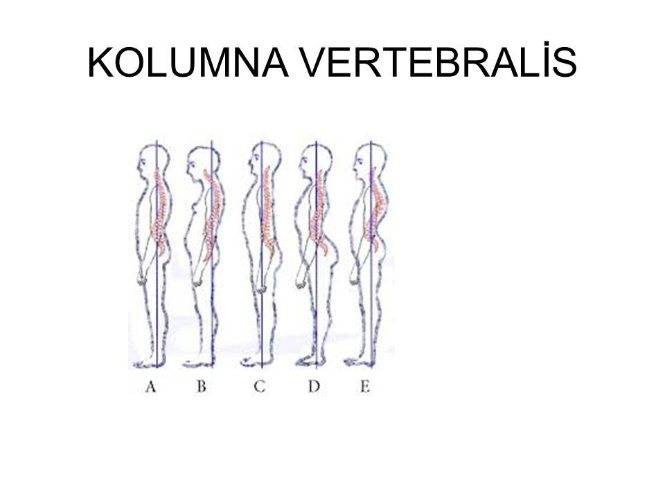KOLUMNA VERTEBRALİS