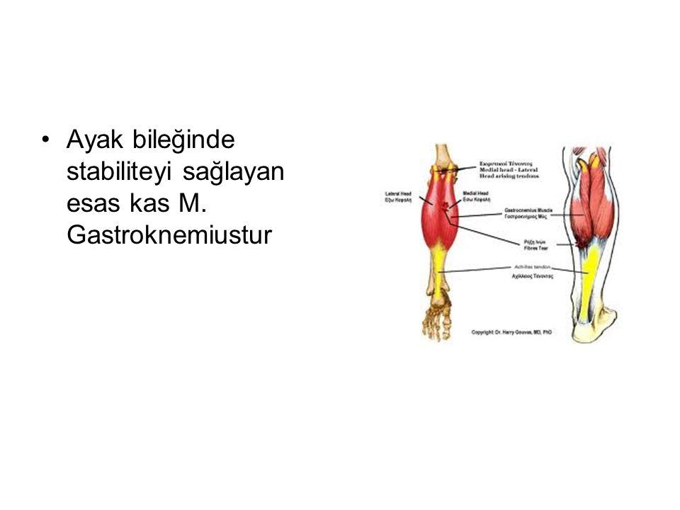 Ayak bileğinde stabiliteyi sağlayan esas kas M. Gastroknemiustur
