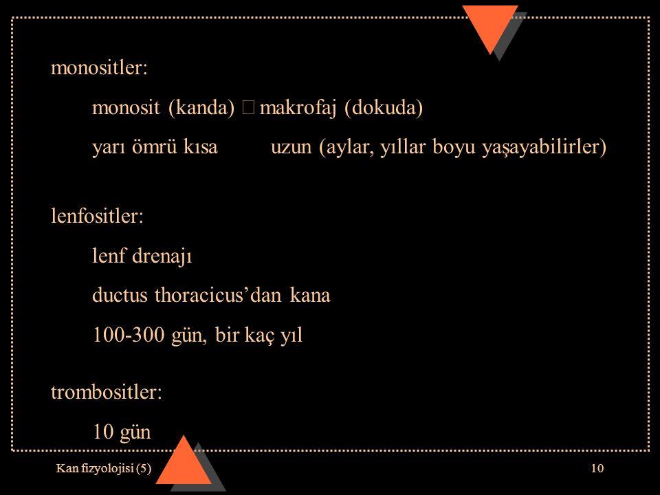 monosit (kanda) Þ makrofaj (dokuda)