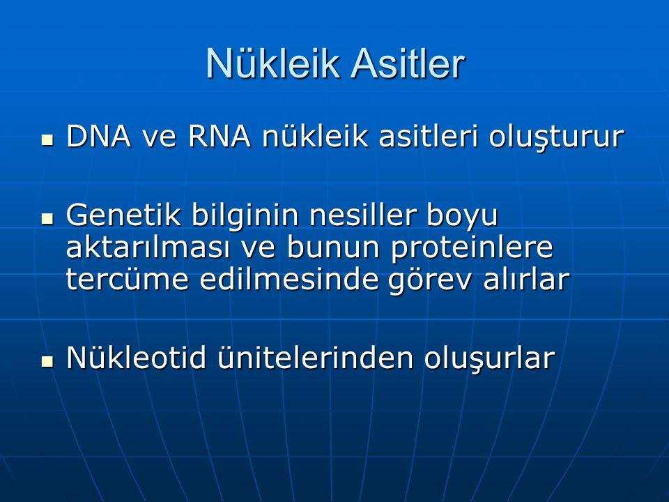 Nükleik Asitler DNA ve RNA nükleik asitleri oluşturur