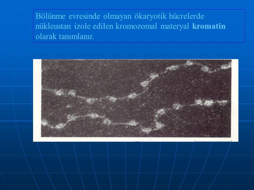 Bölünme evresinde olmayan ökaryotik hücrelerde nükleustan izole edilen kromozomal materyal kromatin olarak tanımlanır.