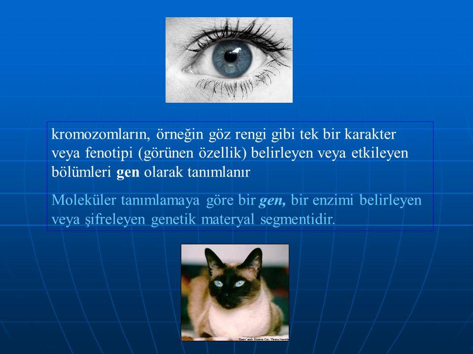 kromozomların, örneğin göz rengi gibi tek bir karakter veya fenotipi (görünen özellik) belirleyen veya etkileyen bölümleri gen olarak tanımlanır