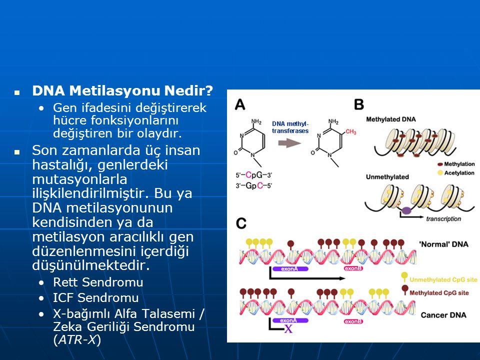 DNA Metilasyonu Nedir Gen ifadesini değiştirerek hücre fonksiyonlarını değiştiren bir olaydır.