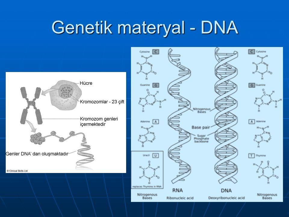 Genetik materyal - DNA