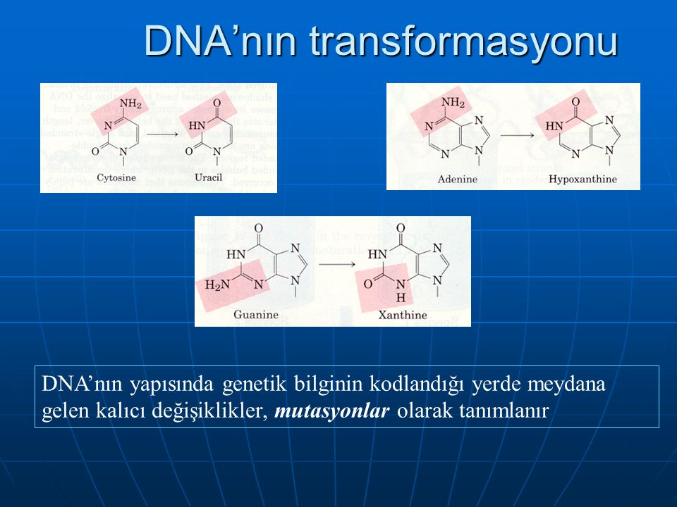 DNA'nın transformasyonu