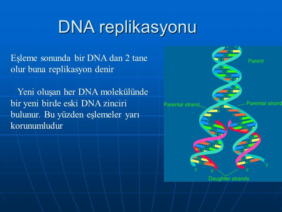 DNA replikasyonu Eşleme sonunda bir DNA dan 2 tane olur buna replikasyon denir.