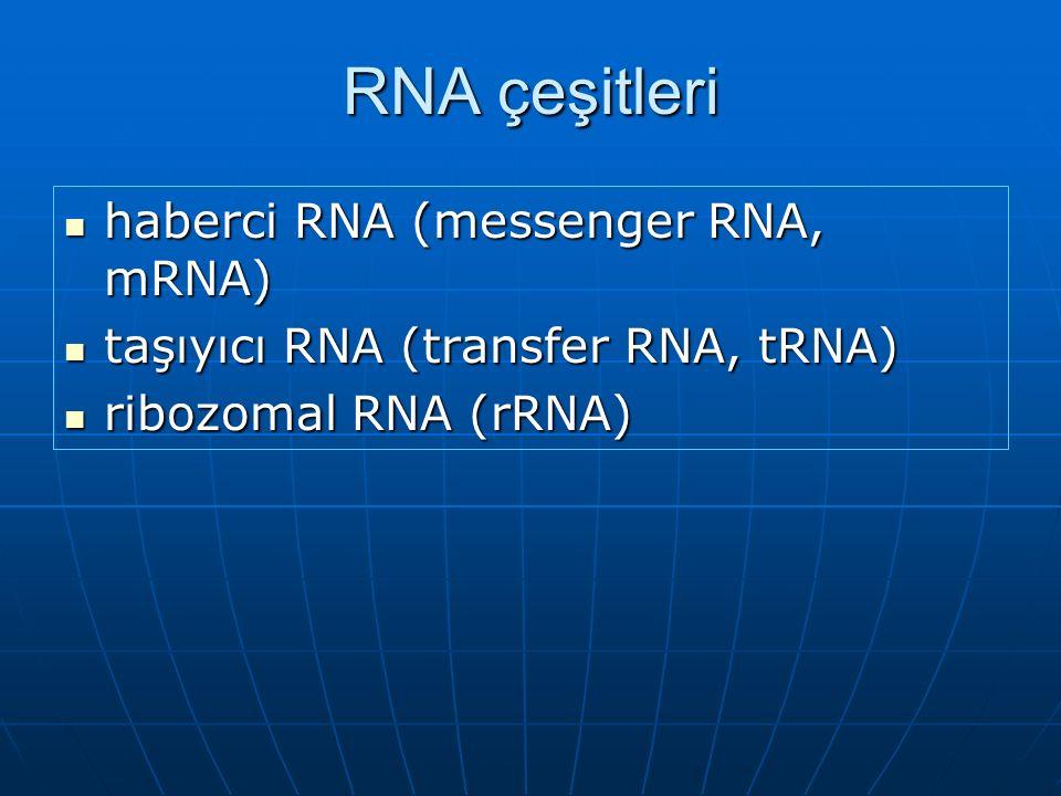 RNA çeşitleri haberci RNA (messenger RNA, mRNA)