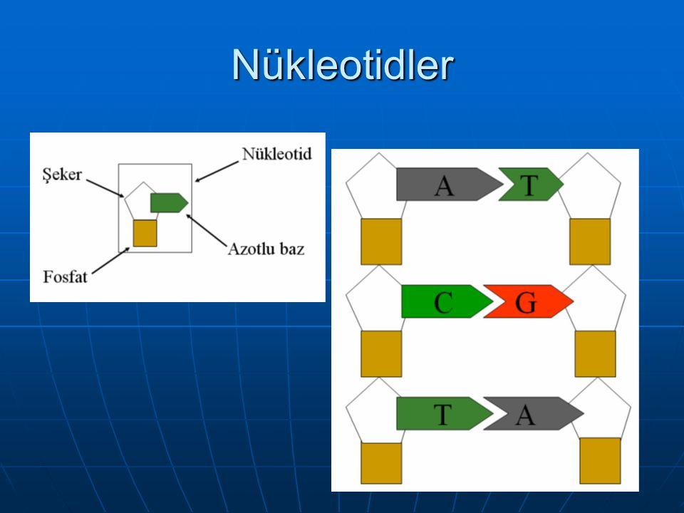 Nükleotidler