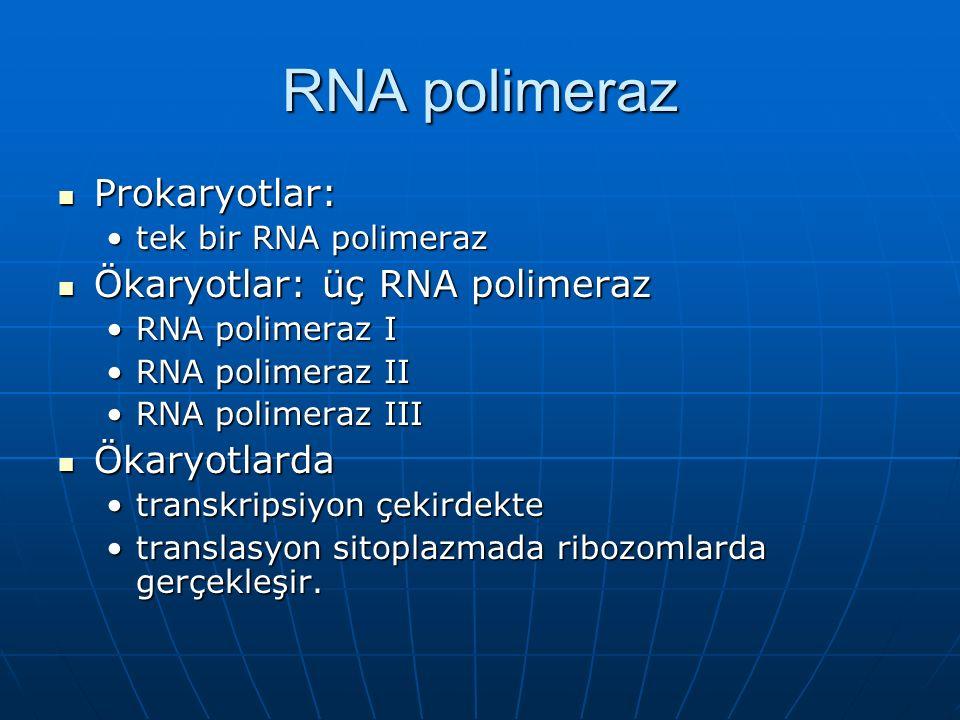 RNA polimeraz Prokaryotlar: Ökaryotlar: üç RNA polimeraz Ökaryotlarda