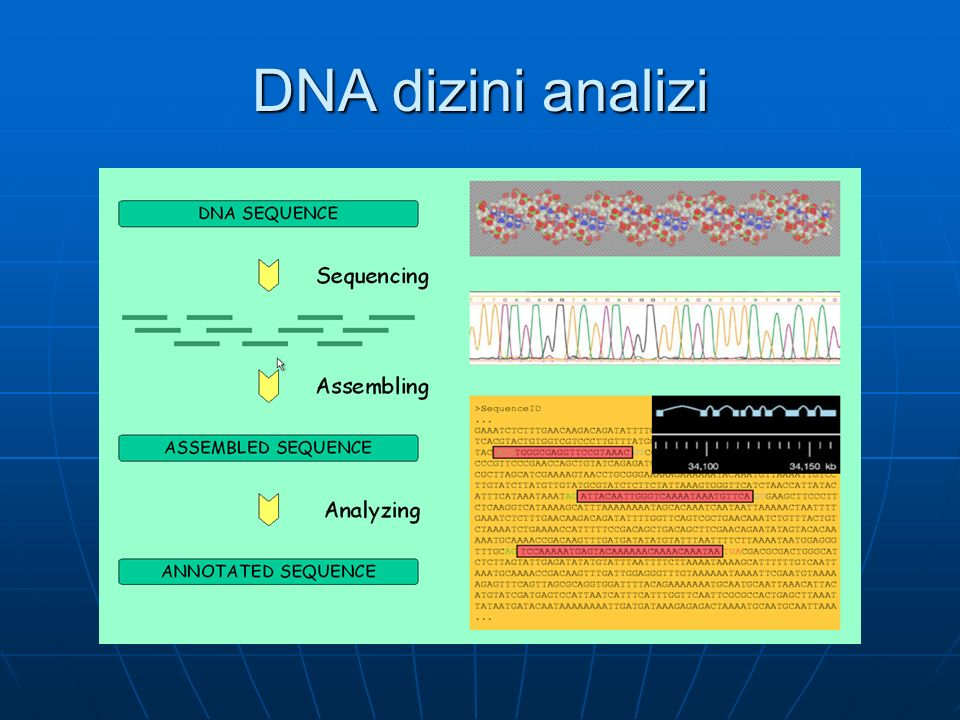 DNA dizini analizi